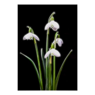 Sparkling Snowdrops print