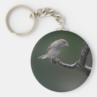 Sparrow  1 keychain