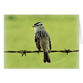 "Sparrow ""Bird on a Wire"" Card"
