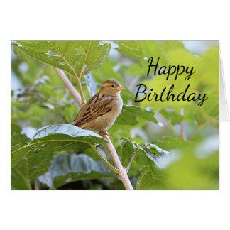 Sparrow Card