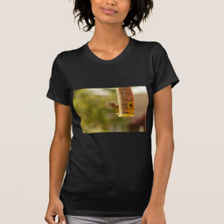 Sparrow eating t-shirt