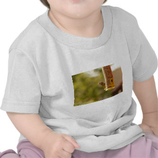 Sparrow eating tee shirts