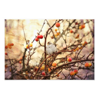 Sparrow in a Crab Apple Tree Photo Print