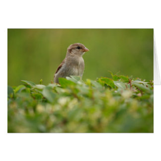 sparrow in green card