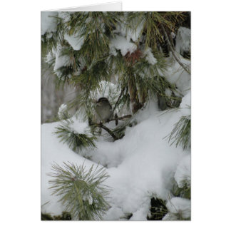 Sparrow In Snowy Evergreen Card