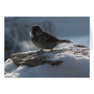 Sparrow in the Snow Card