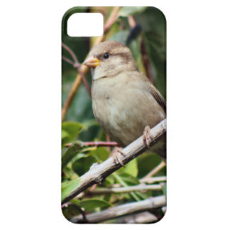 Sparrow iPhone 5 Cases