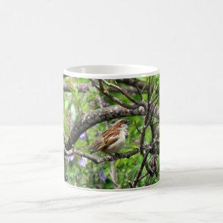 Sparrow on a branch coffee mug