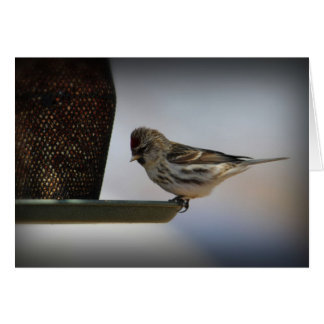 Sparrow on Bird Feeder Card