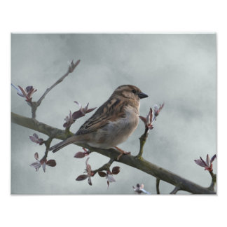 Sparrow on Branch Photo Print