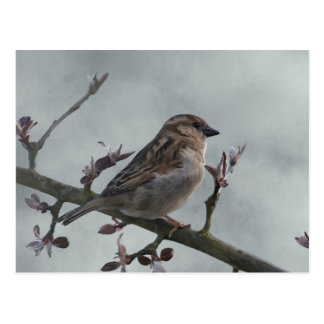 Sparrow on Branch Postcard