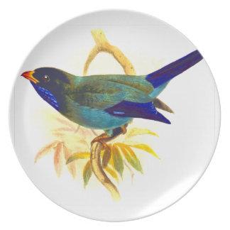 Sparrow Plate