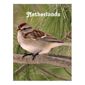 Sparrow Postcard