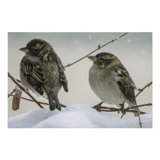 Sparrows In Winter Poster