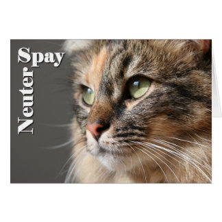 Spay / Neuter Greeting Card