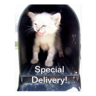 Special deliver kitty postcard