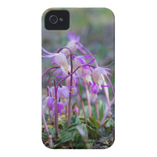 Species: Calypso orchid iPhone 4 Case