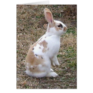 Speckled Bunny Rabbit greeting card