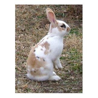 Speckled Bunny Rabbit Postcard