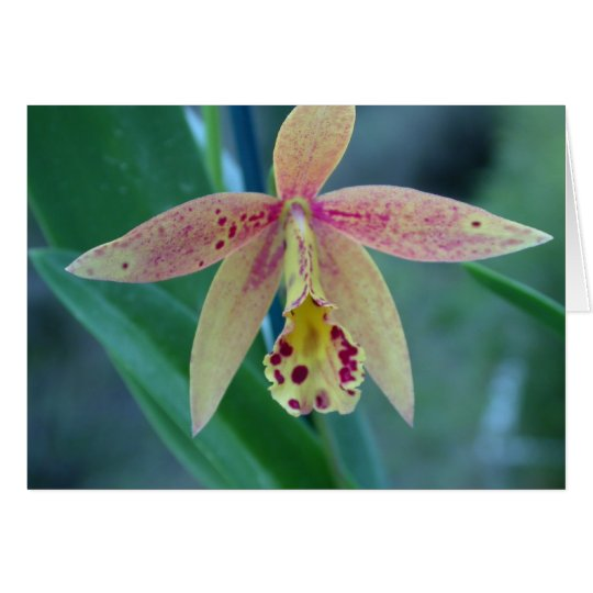 Speckled Cattleya Orchid Card
