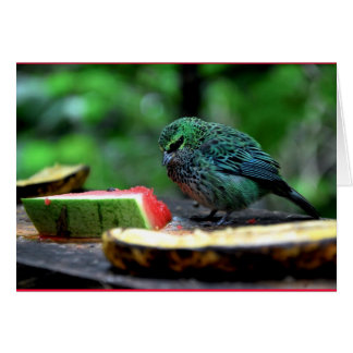 """Speckled Tanager"" Card"