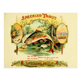Speckled Trout Cigar Case Postcard