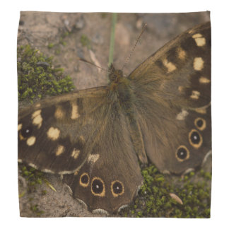 Speckled Wood Butterfly Bandana