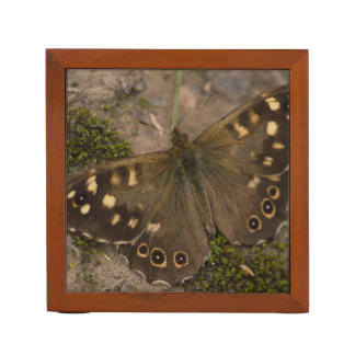 Speckled Wood Butterfly Desk Organizer