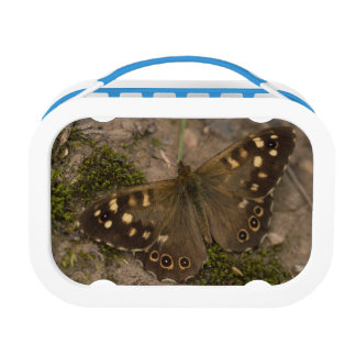 Speckled Wood Butterfly Lunch Box