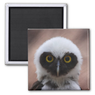 Spectacled Owl Magnet