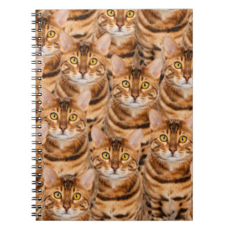 Spectacular Bengal Kittens Notebook