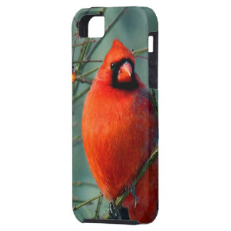 Spectacular Red Male Cardinal iPhone 5 Cover