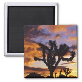 Spectacular Sunrise at Joshua Tree National Park Magnet
