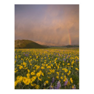 Spectacular wildflower meadow at sunrise in postcard