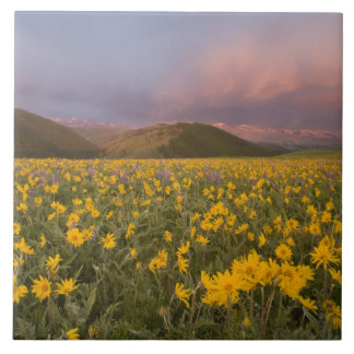 Spectacular wildflower meadow at sunrise in the tile