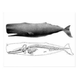 sperm-whale-1 postcard