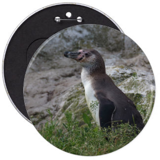 Spheniscus humboldti 6 inch round button
