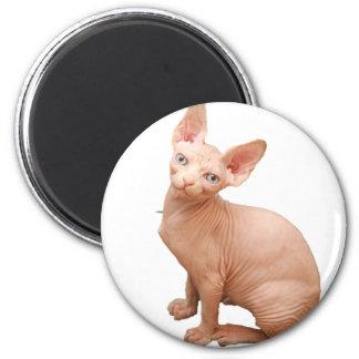 Sphinx cat magnet