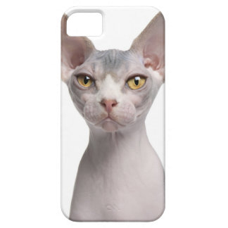 Sphynx (7 months old) iPhone 5 cover