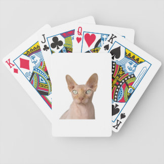 sphynx bicycle playing cards