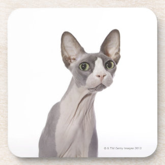Sphynx Cat with surprised expression Coasters