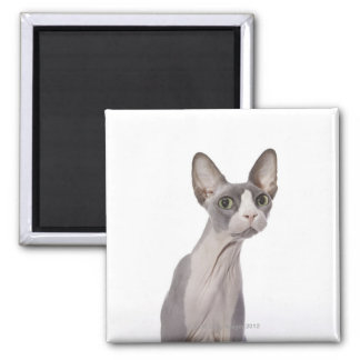 Sphynx Cat with surprised expression Magnet