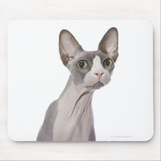 Sphynx Cat with surprised expression Mouse Pad