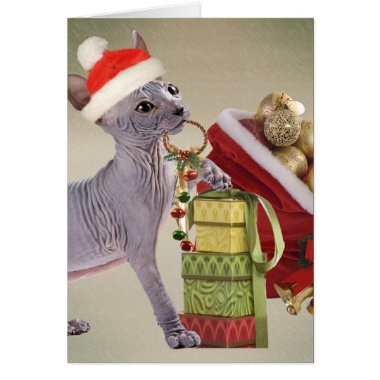 Sphynx Kitten Christmas Card