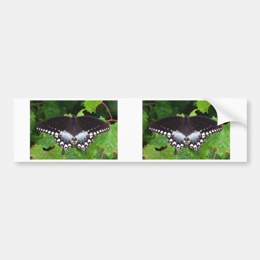 Spicebush Swallowtail 06/13 Bumper Stickers