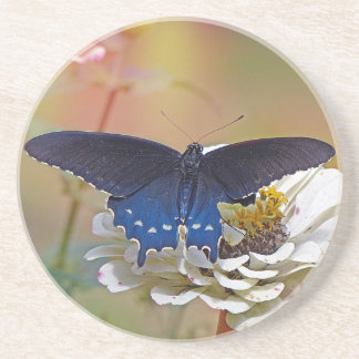 Spicebush Swallowtail Beverage Coaster