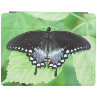 Spicebush Swallowtail Butterfly iPad Cover