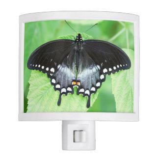 Spicebush Swallowtail Butterfly Night Light