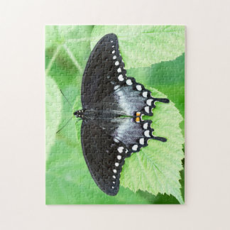 Spicebush Swallowtail Butterfly Puzzle