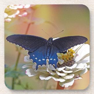 Spicebush Swallowtail Coaster